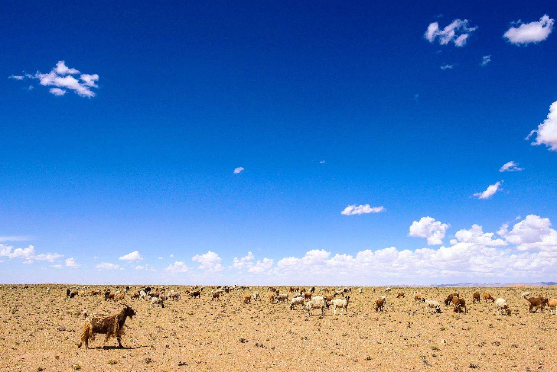 広大な大地に羊が草をはむ