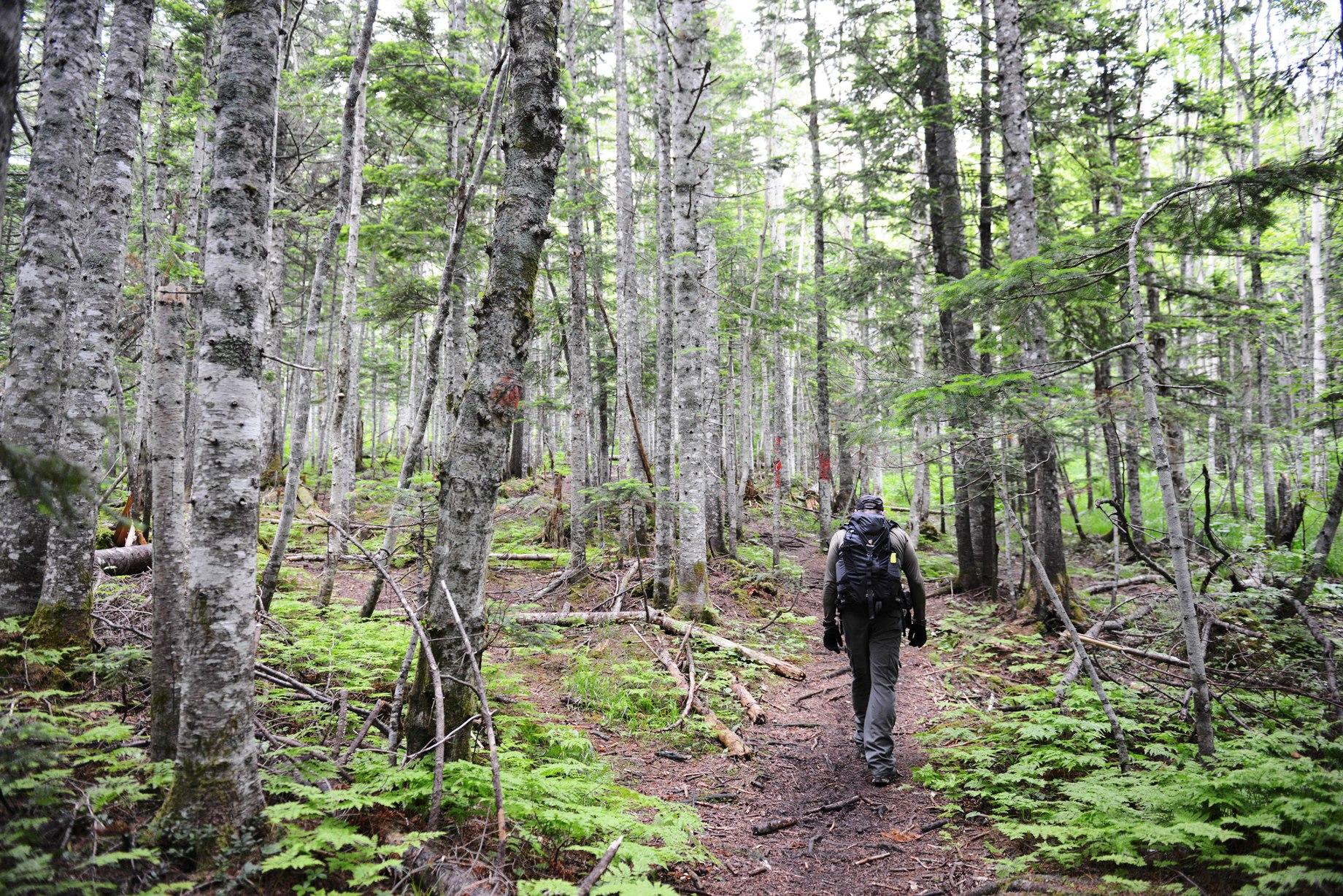 チェーホフ山登山口から樹林帯を歩く