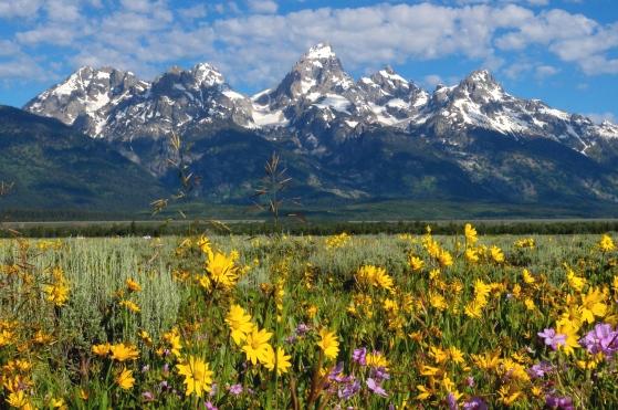 多くの高山植物が咲き誇る