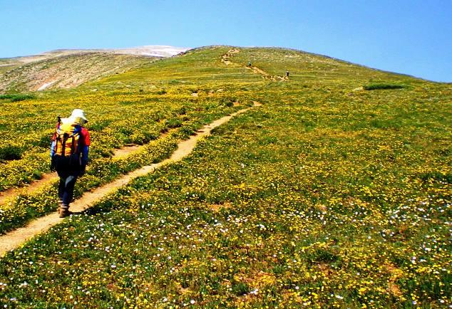 森林限界を越え、夏には一面のお花畑が広がる草原帯をMt.エルバートの山頂にむけて登る