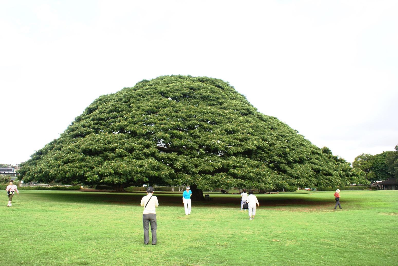 CMで有名なこの木なんの木