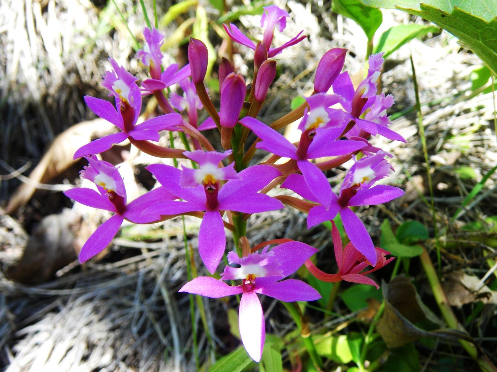 永遠の命の意味を持つウイニャワイニャの花