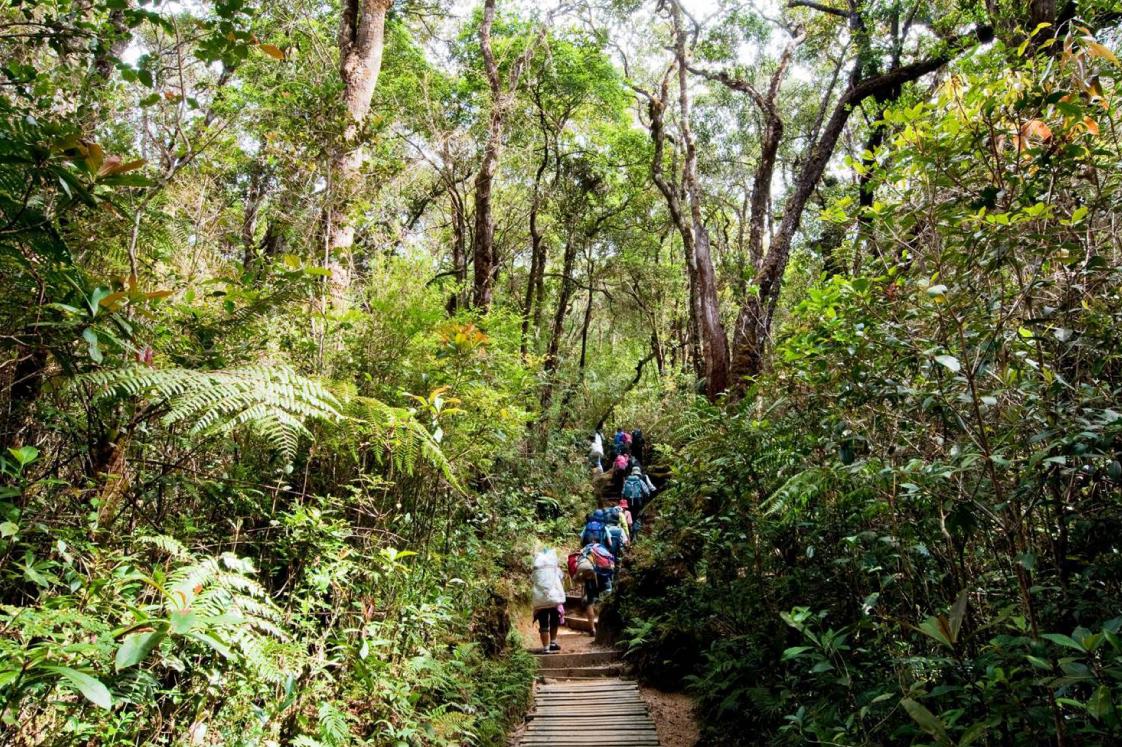 1日目は東南アジアらしいジャングル(登山道は整備されていて快適です。)