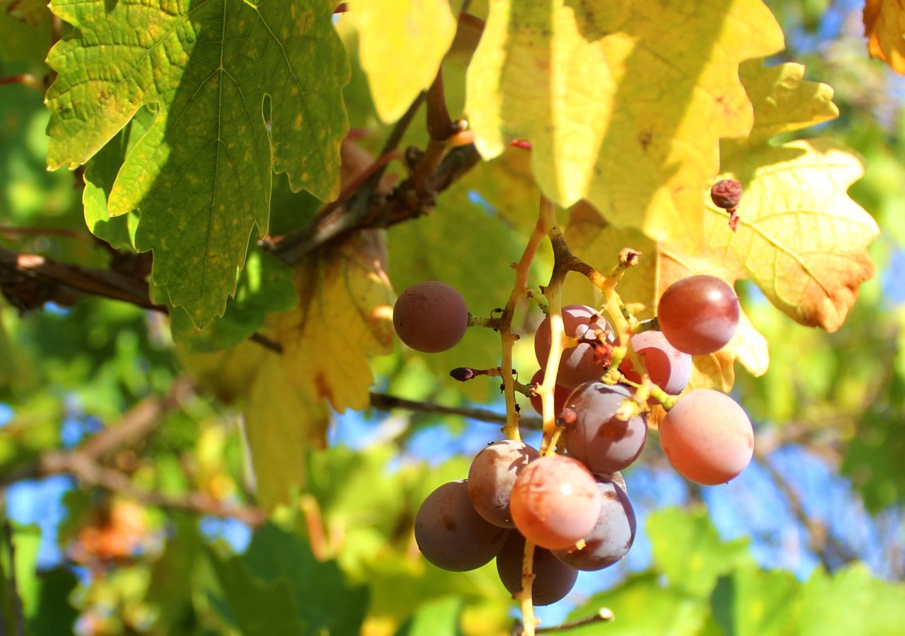 秋は実りの季節