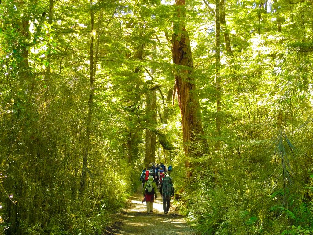 美しいブナの森を歩くミルフォードトラック(3日目)