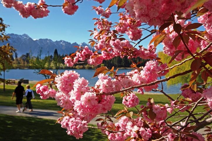 街中を彩る春の花