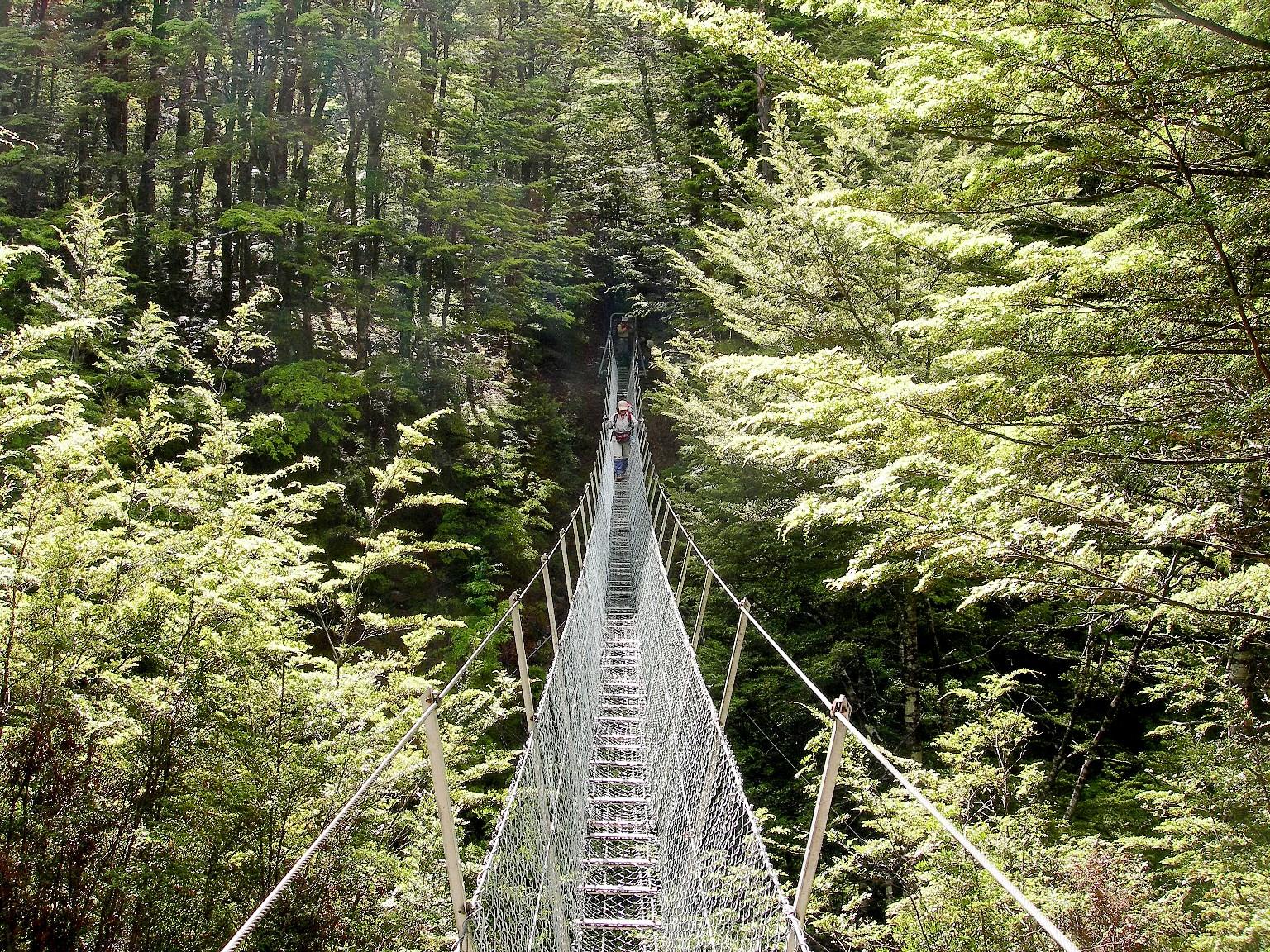 吊り橋を渡り、ルートバーン・トラックを目指す(6日目)