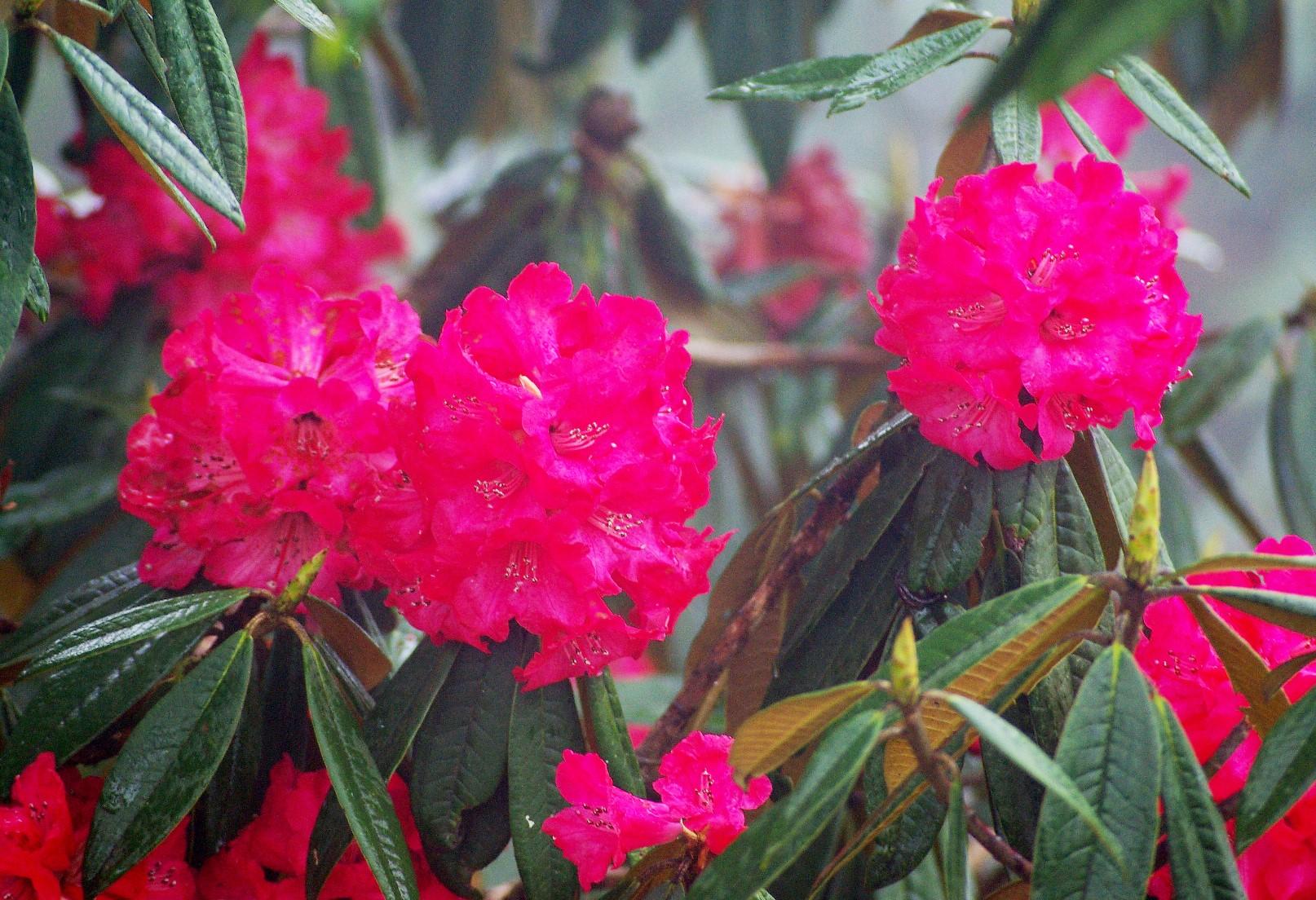 4~5月にはシャクナゲなどの花が山麓を彩る