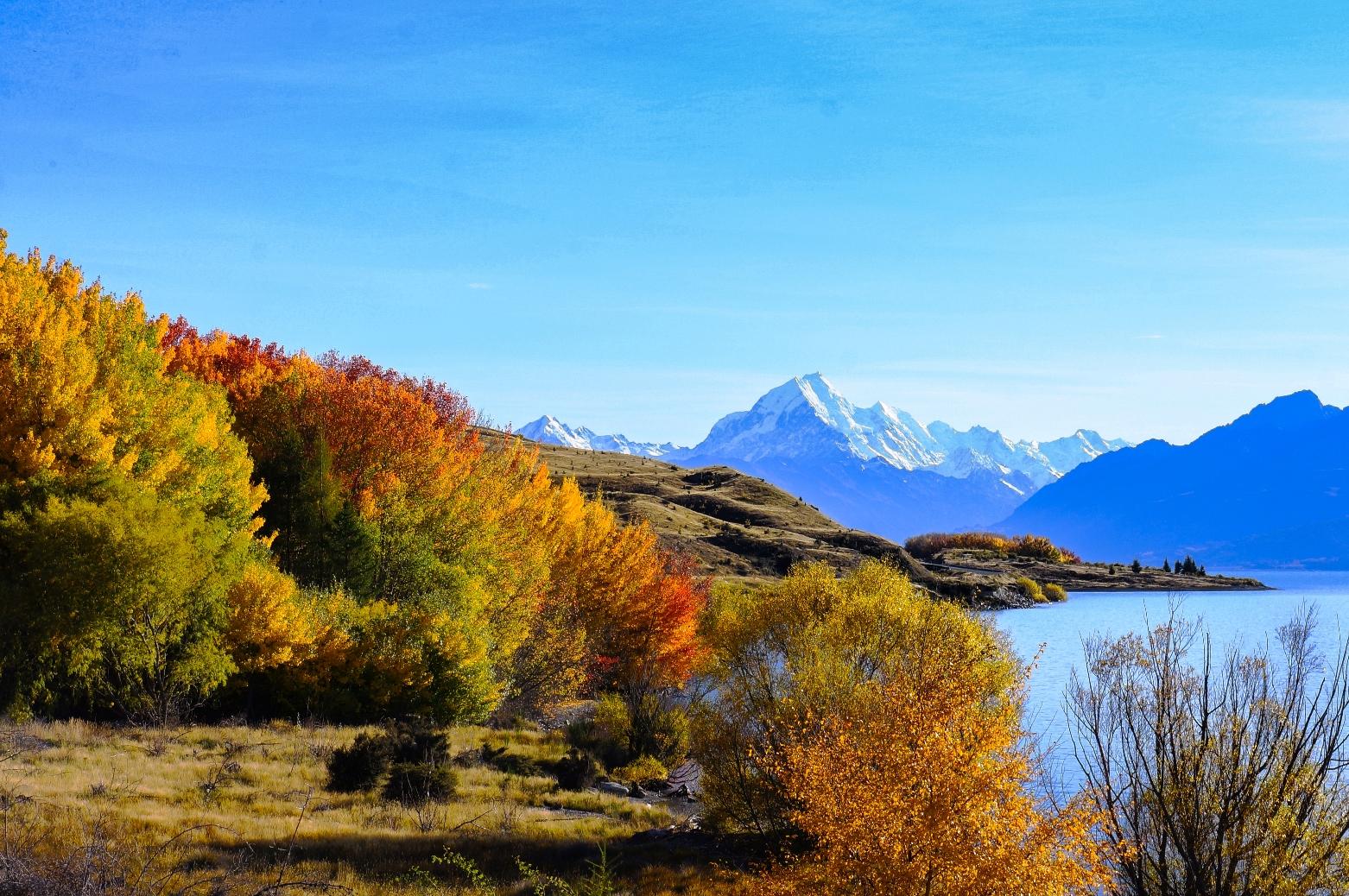 秋の紅葉とNZ最高峰アオラキ/マウントクックの展望をのぞむ(7日目)
