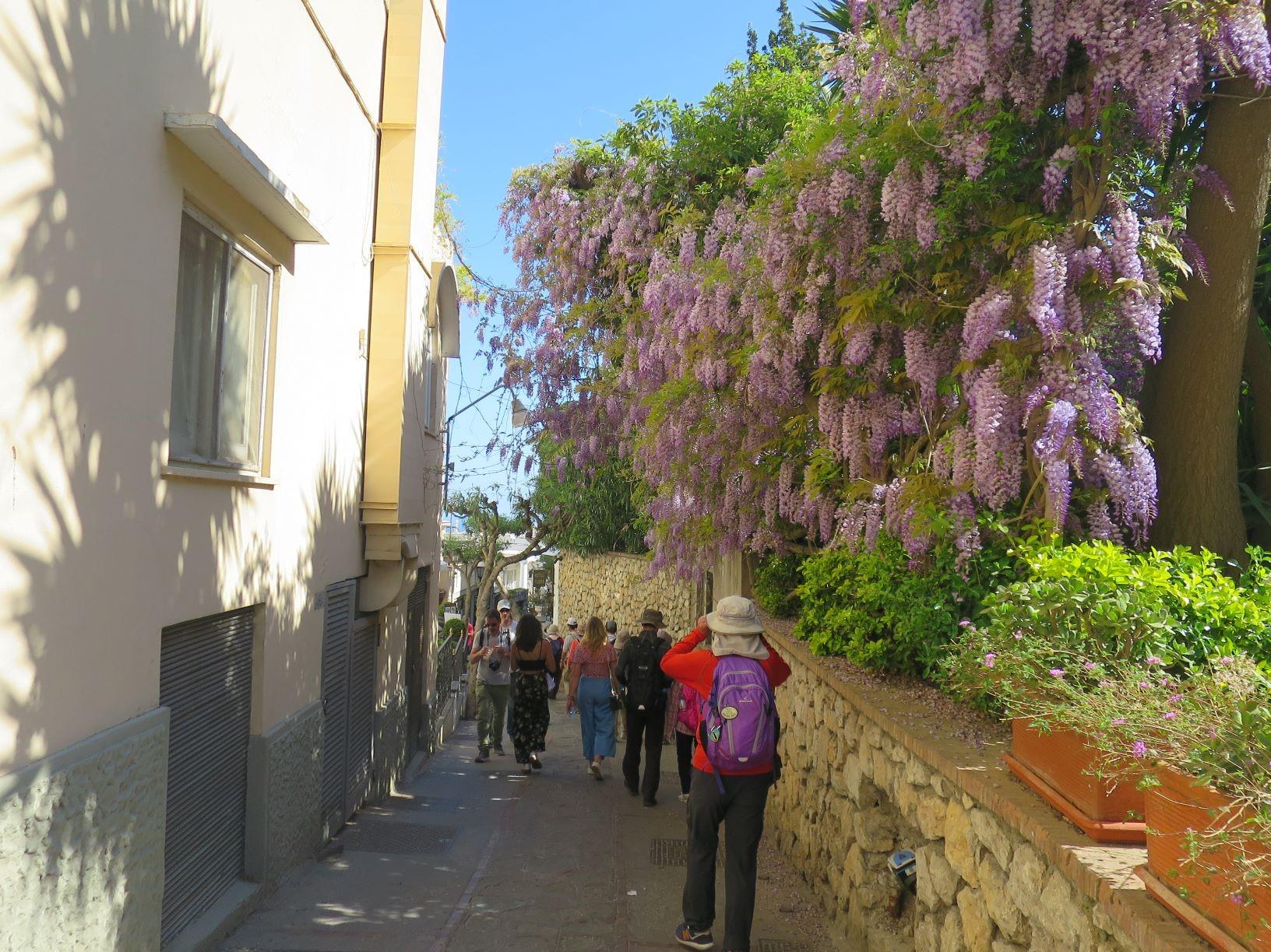カプリ島が花いっぱいの季節に歩く(4月)