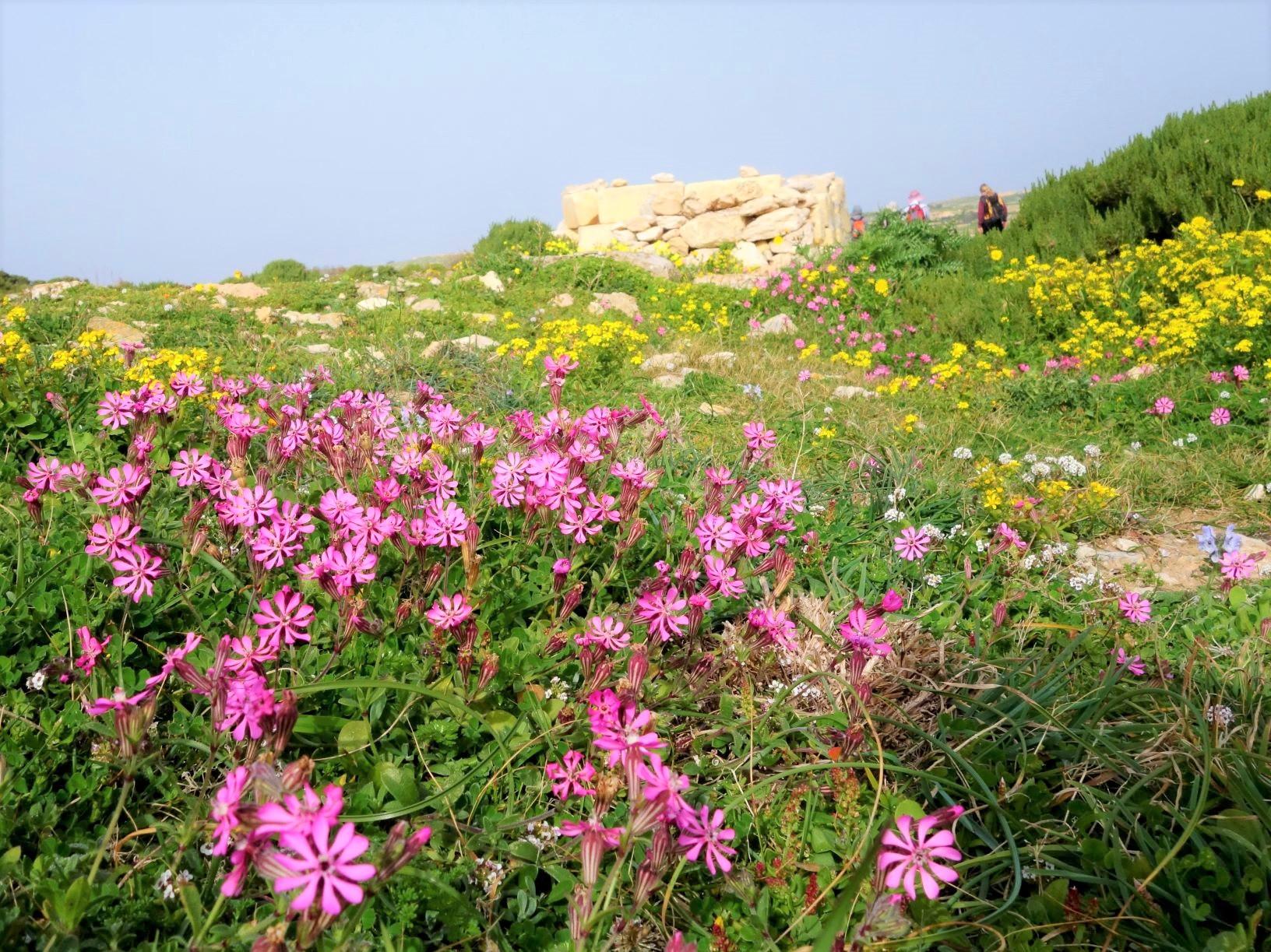 春の花が咲き誇るトレイルを歩く(4日目)