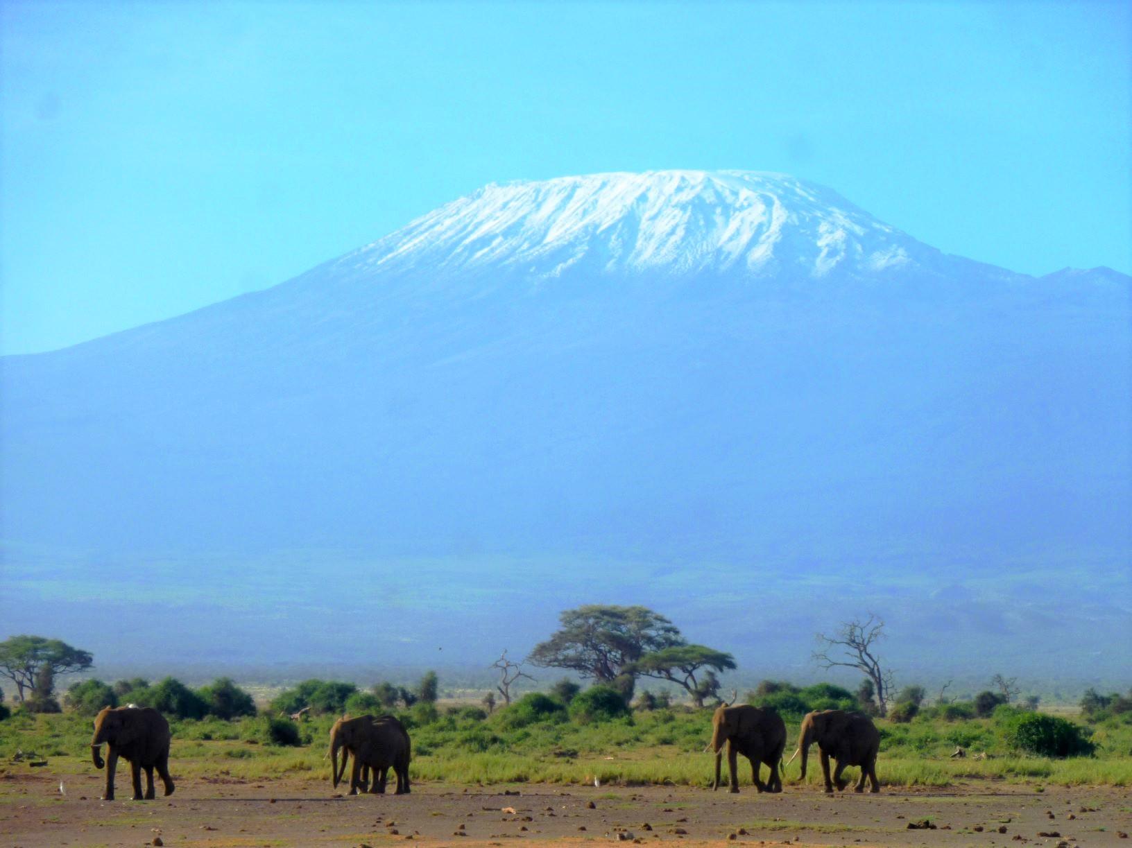 キリマンジャロをバックに悠々と歩くアフリカゾウの群れ(7・8日目)
