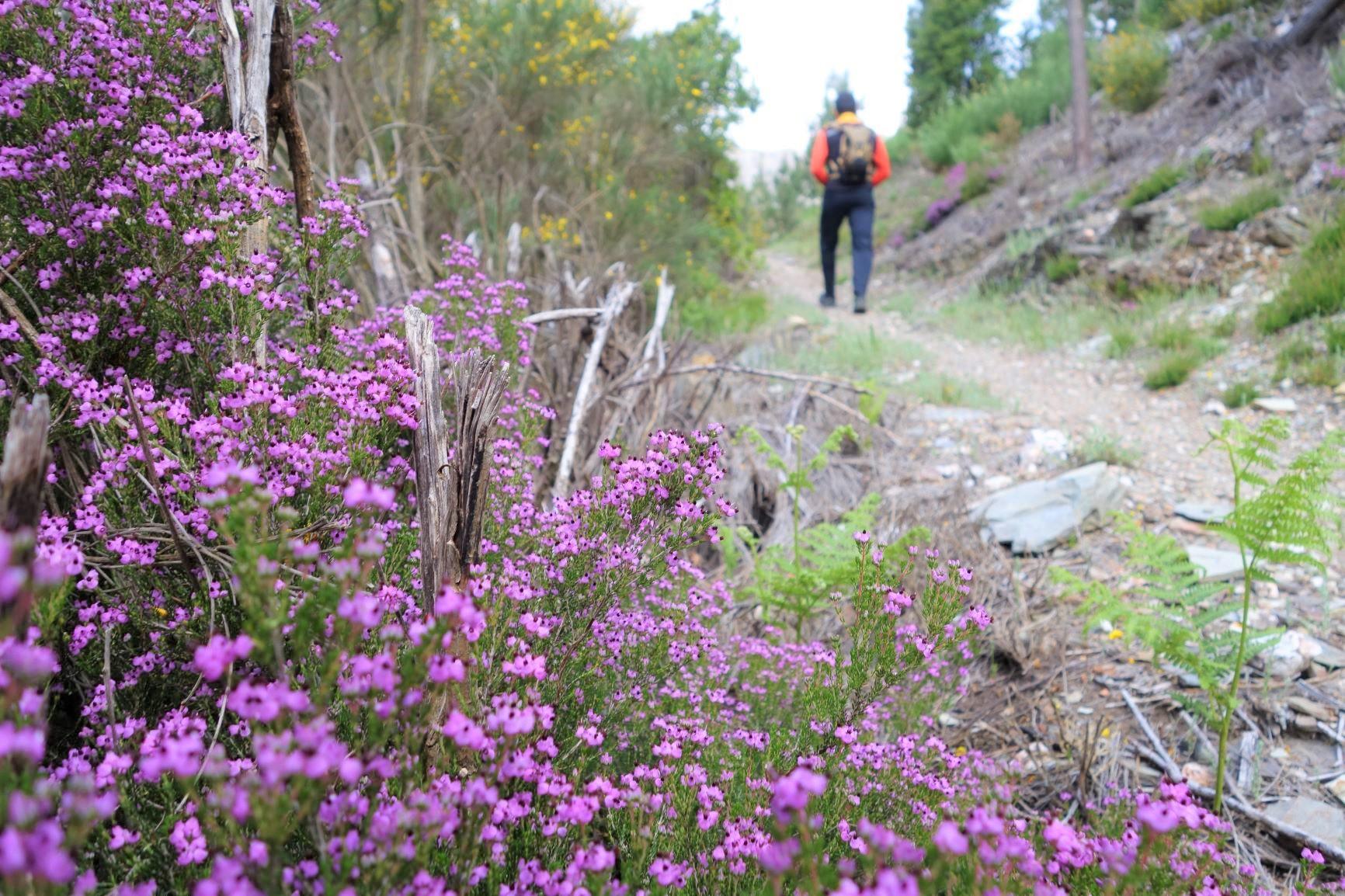 花咲くトレイルをハイキング(4日目)