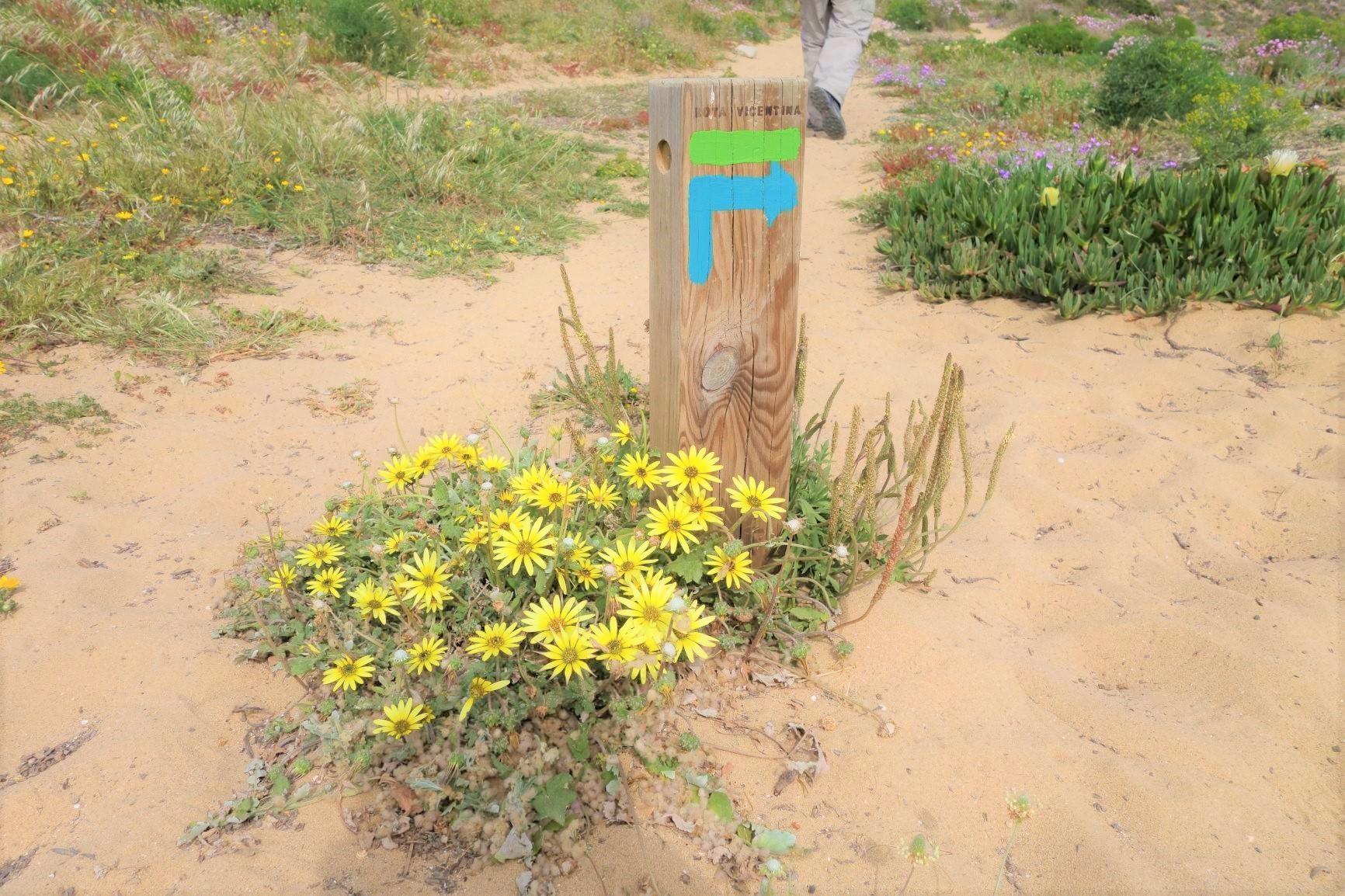 ロタ・ヴィンセンティナの標識