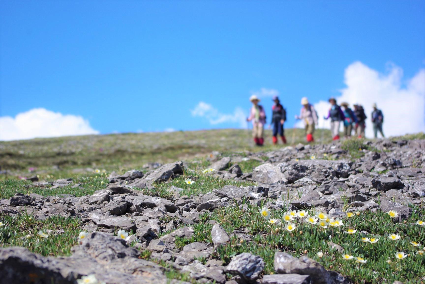 トレイル脇に咲き乱れる高山植物(5日目)