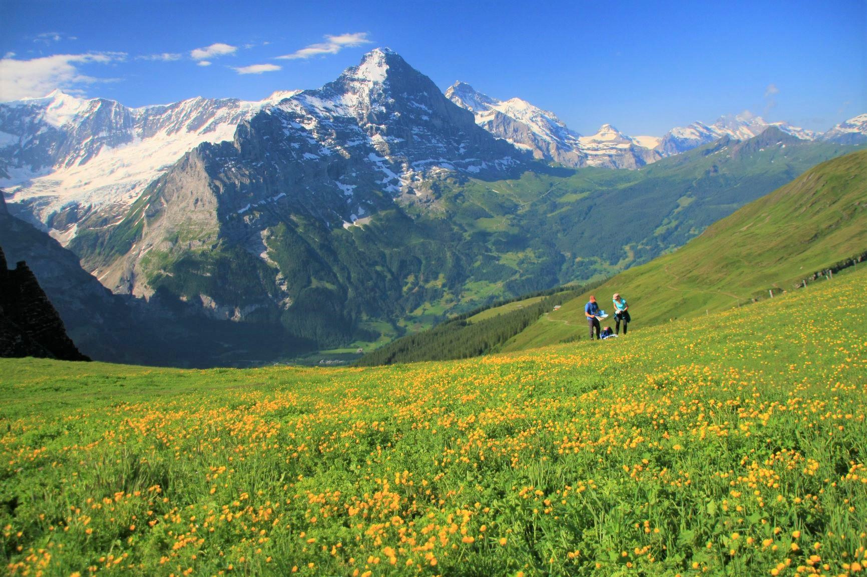 お花畑とアイガーが美しいスイスの夏にゆったり滞在(2日目)