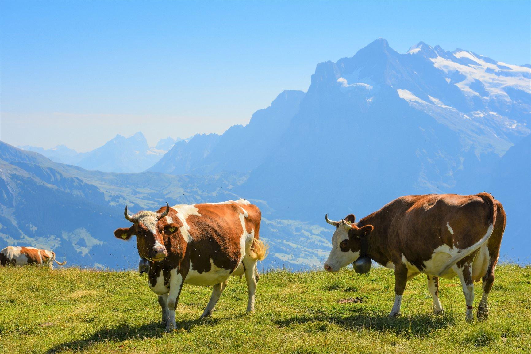 牧歌的なスイス・アルプスを楽しむ(6日目)