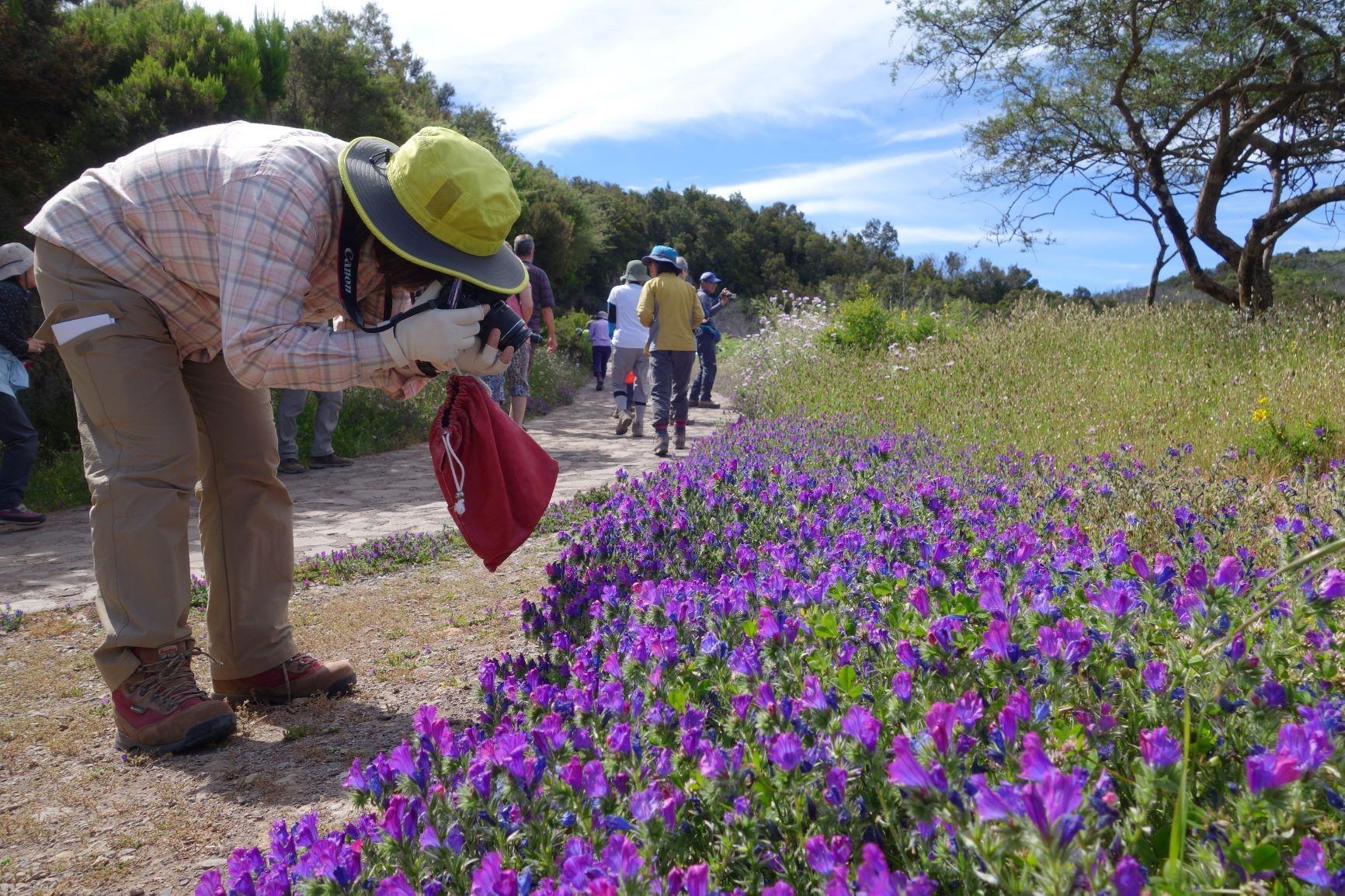 島を彩る個性的な花々