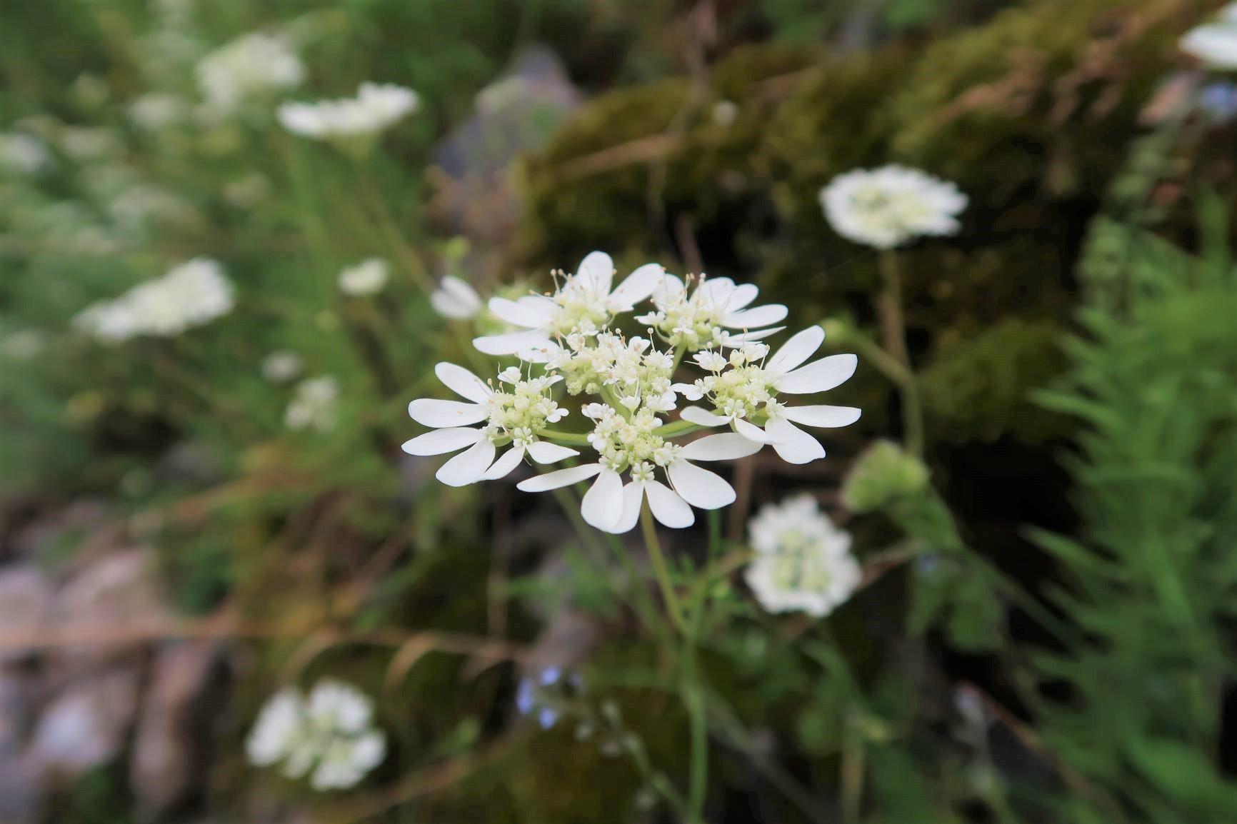山麓を彩る花々