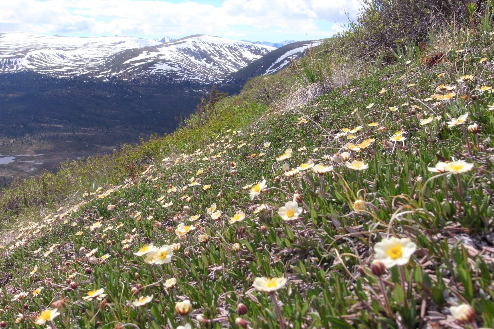 初夏の花が咲き始める季節