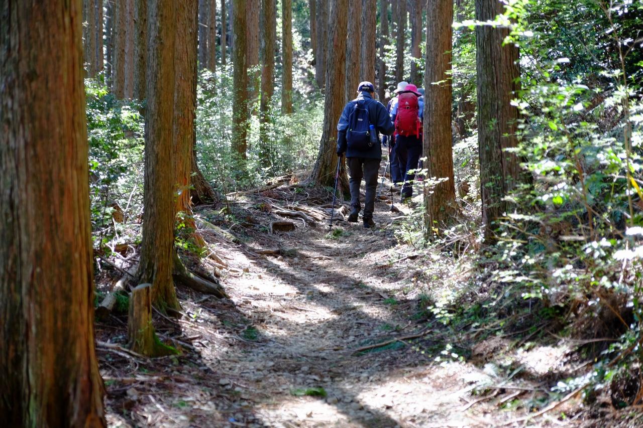 杉木立の中の清々しい道
