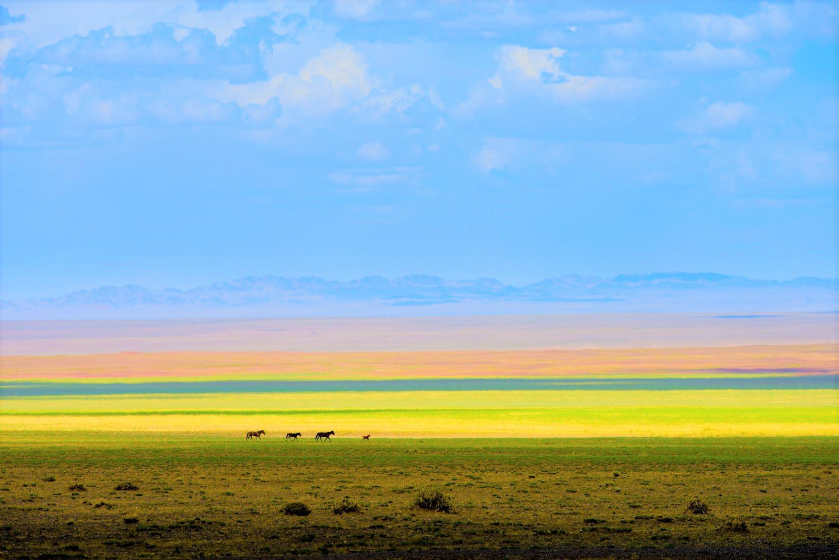 モンゴルの広大な草原を体感する