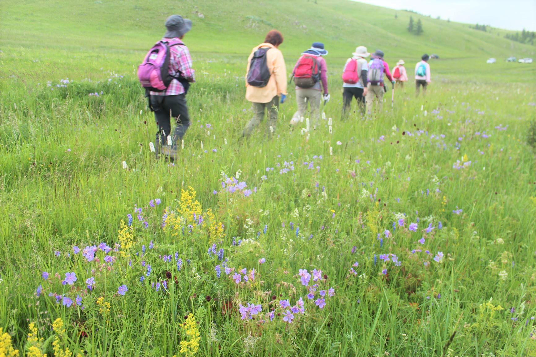 花咲く高原を歩く