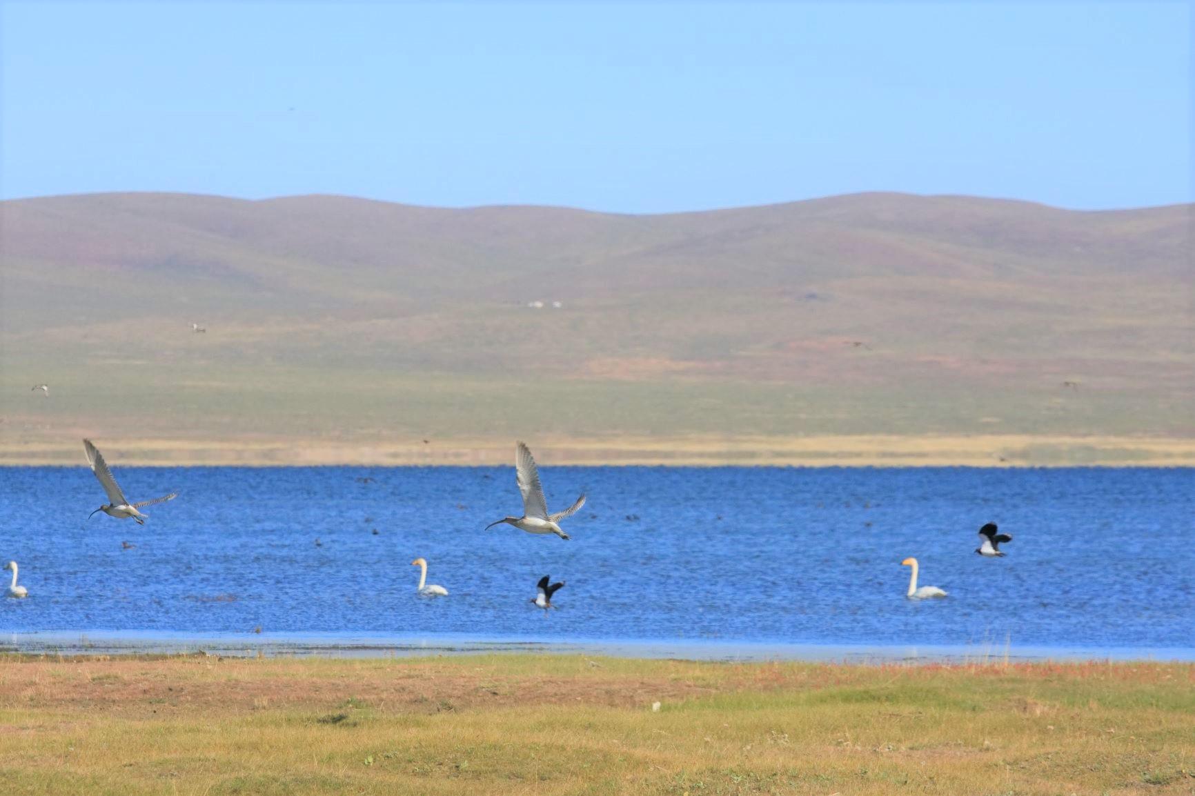 多くの野鳥が見られるウギ湖
