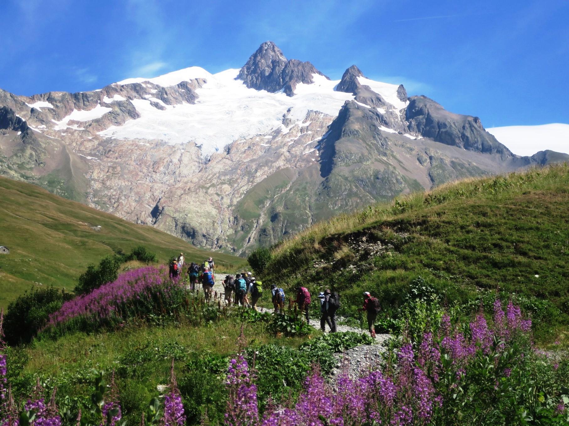 シーズンには多くの花が見られるツール・ド・モンブラン。お花畑の中を、セーニュのコルへと登る(4日目)
