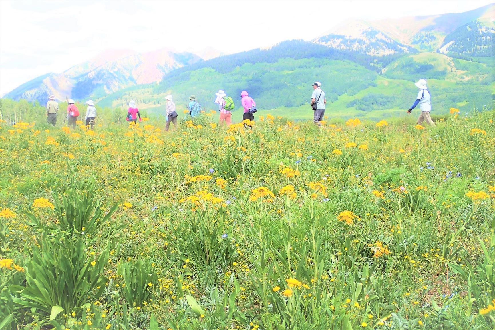 この時期、足元には花々が咲き乱れ、至福のハイキングが楽しめる