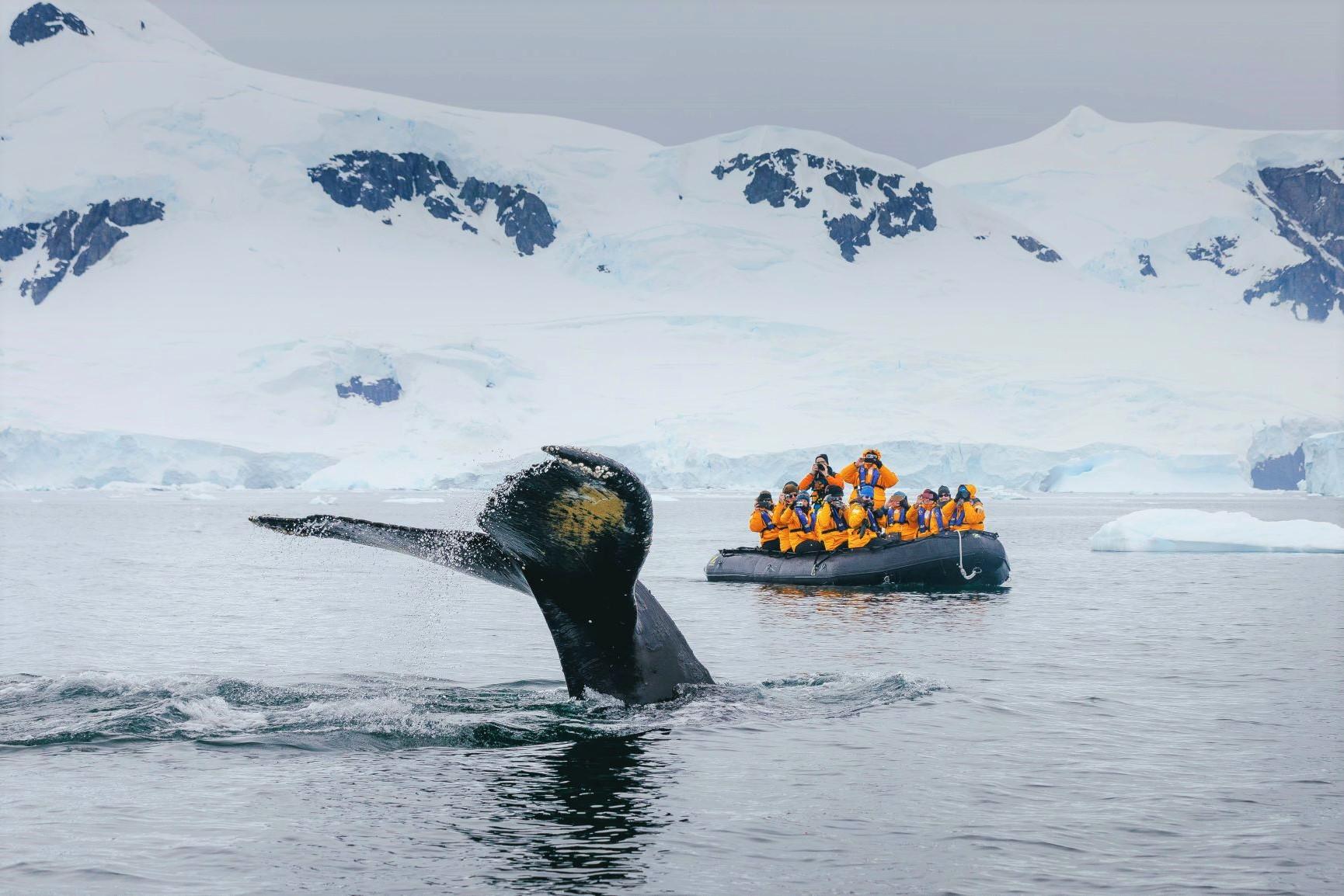 ゾディアックボートからザトウクジラを観察