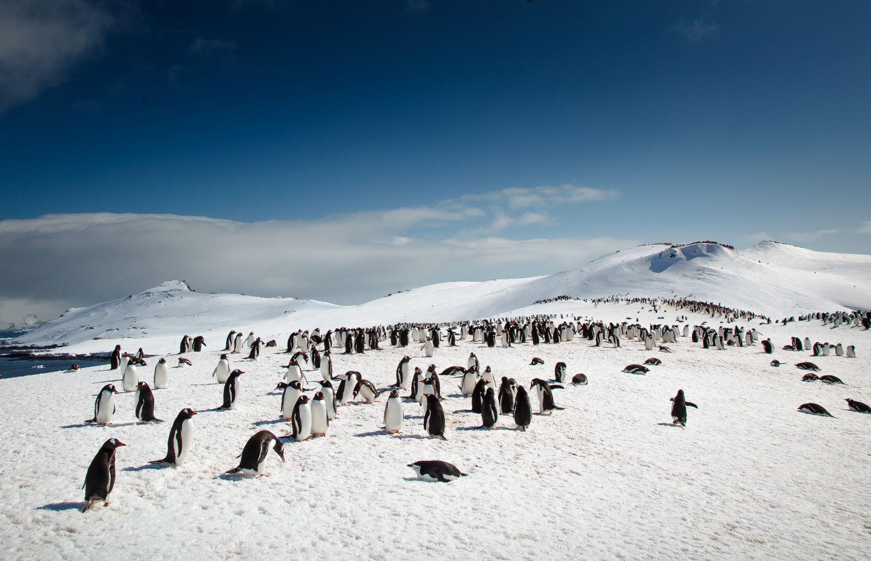 ゼンツーペンギンの営巣地