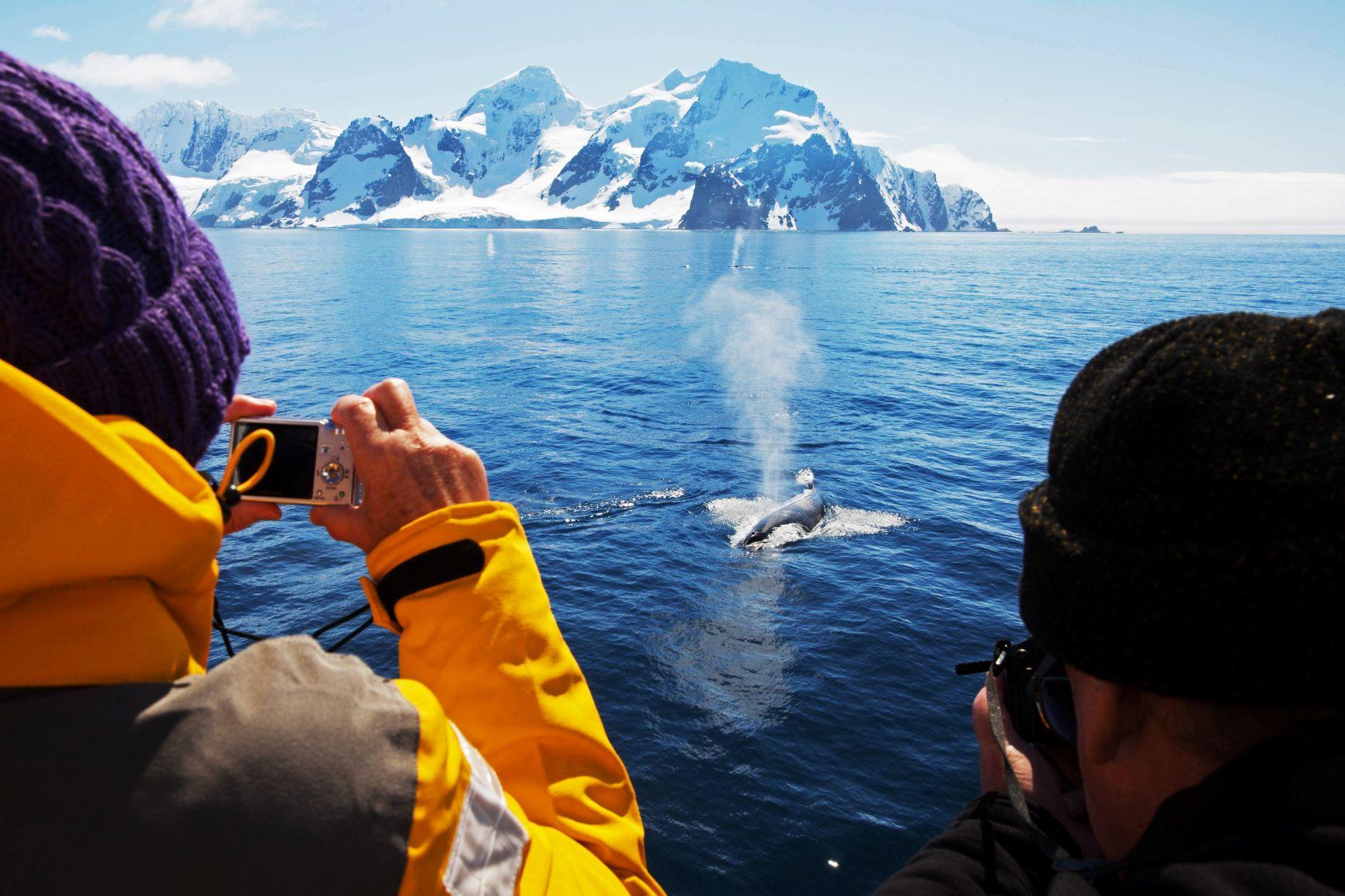 ソディアックボートからザトウクジラを観察