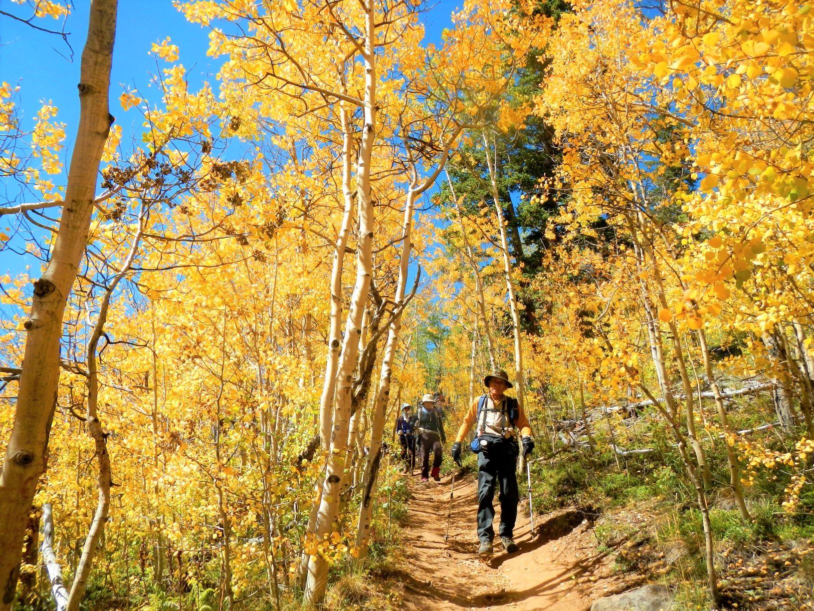 秋にはアスペンの森が黄金色に染まる