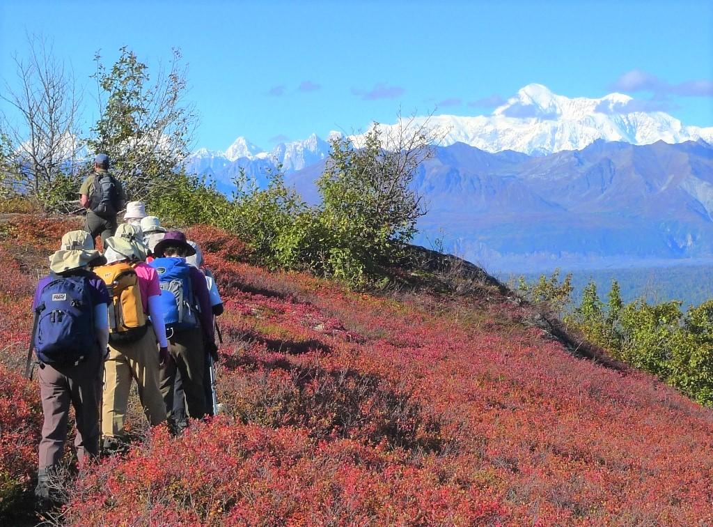 デナリを含むアラスカ山脈を展望しながらのハイキングを楽しむ(8日目)