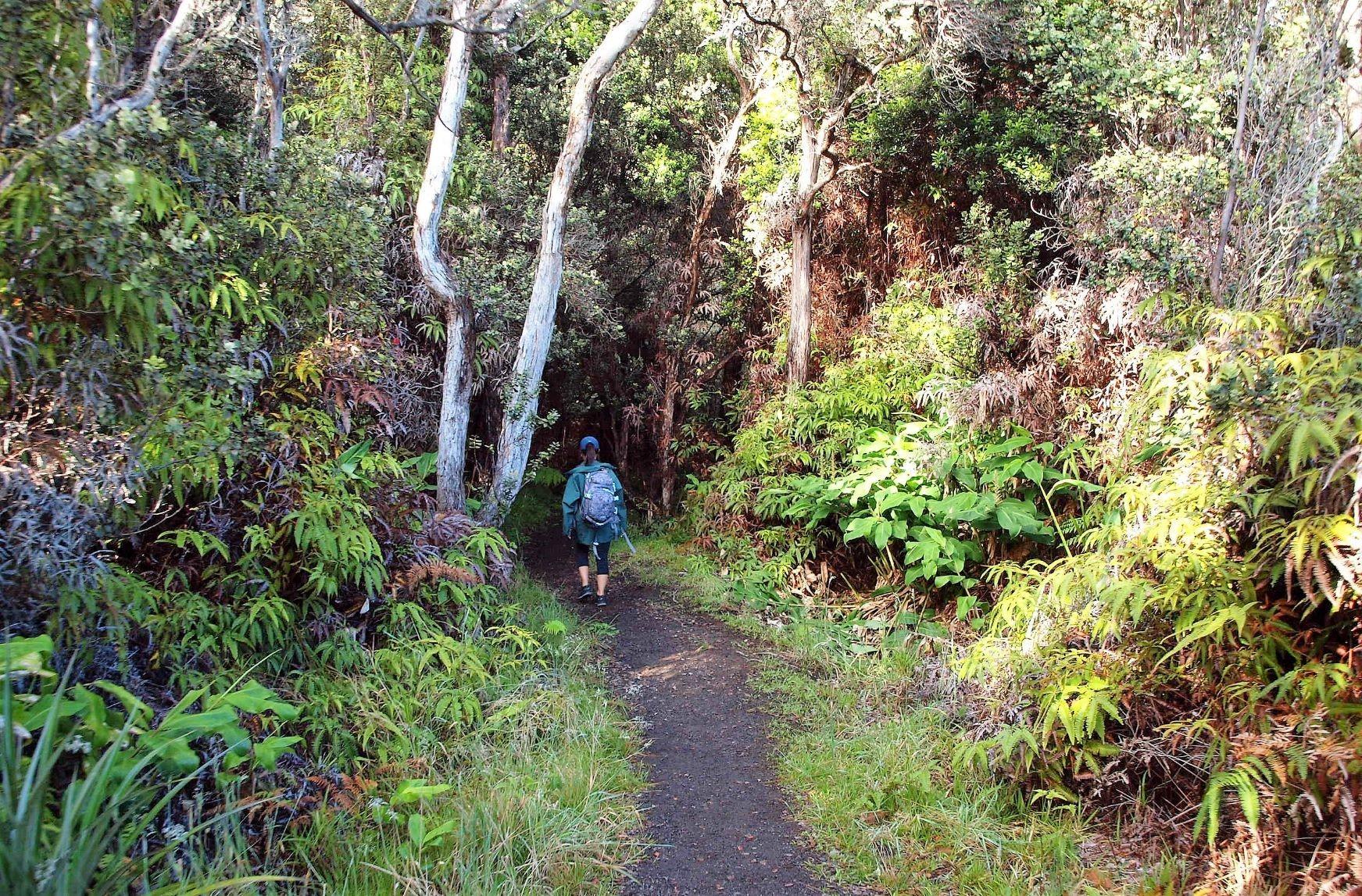 熱帯の植物の中をハイキング
