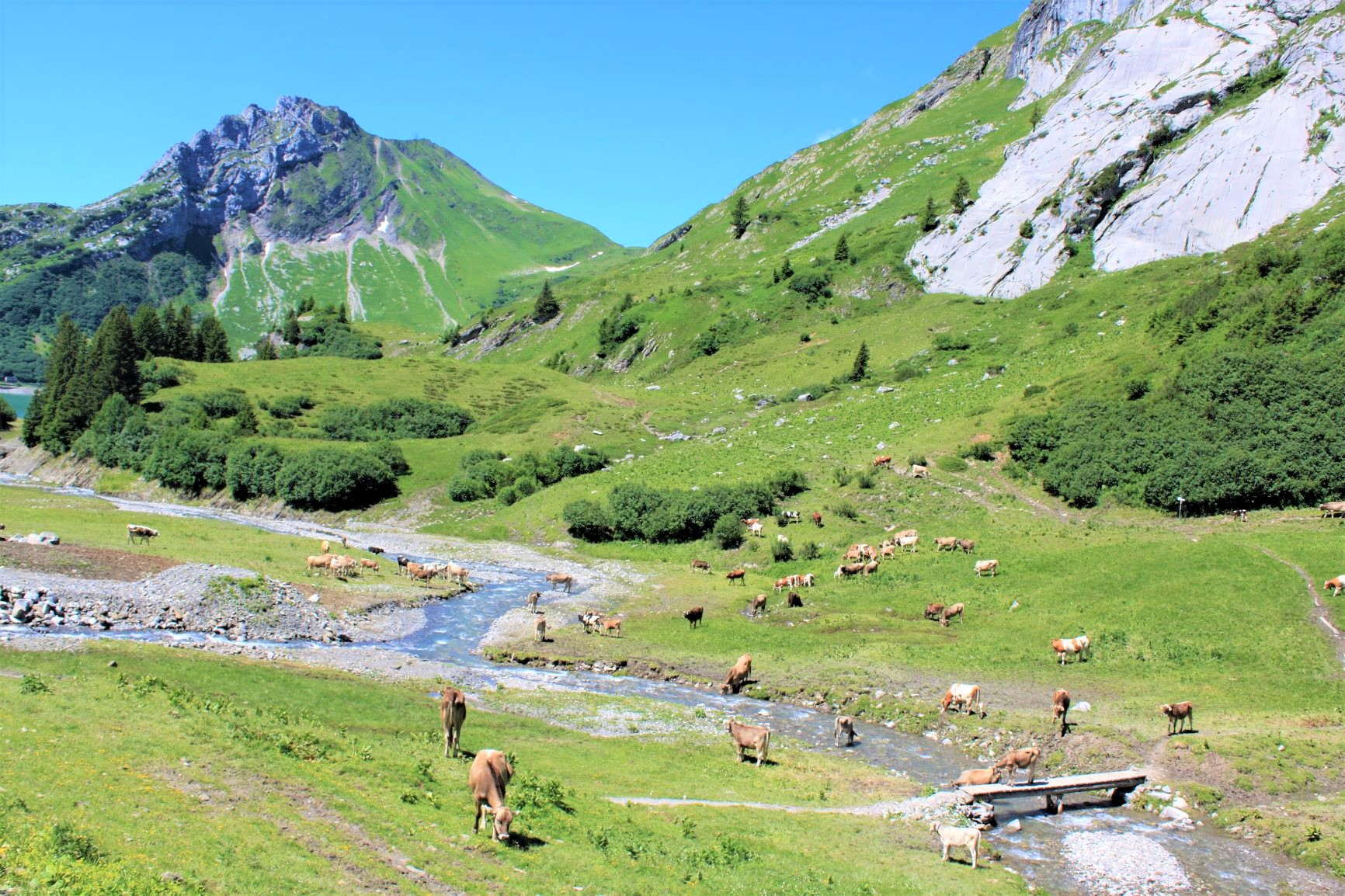 牛が草を食む牧歌的な風景が広がるチロル地方(3日目)