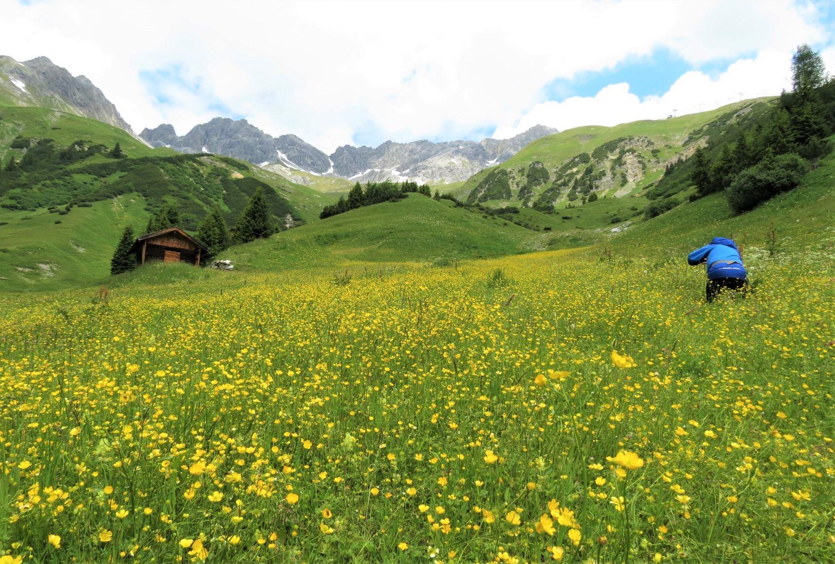 """""""花の散策路(ブルーメンワンダリング)""""と呼ばれる人気のハイキングコースで花々を満喫(4日目)"""
