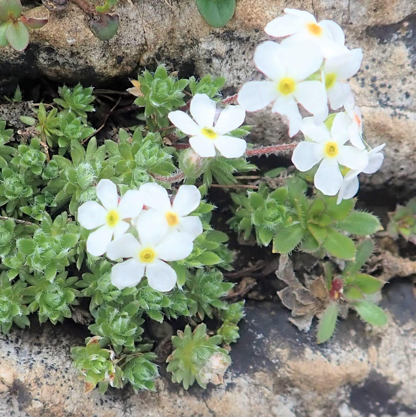 山麓を彩る花々(6月出発)