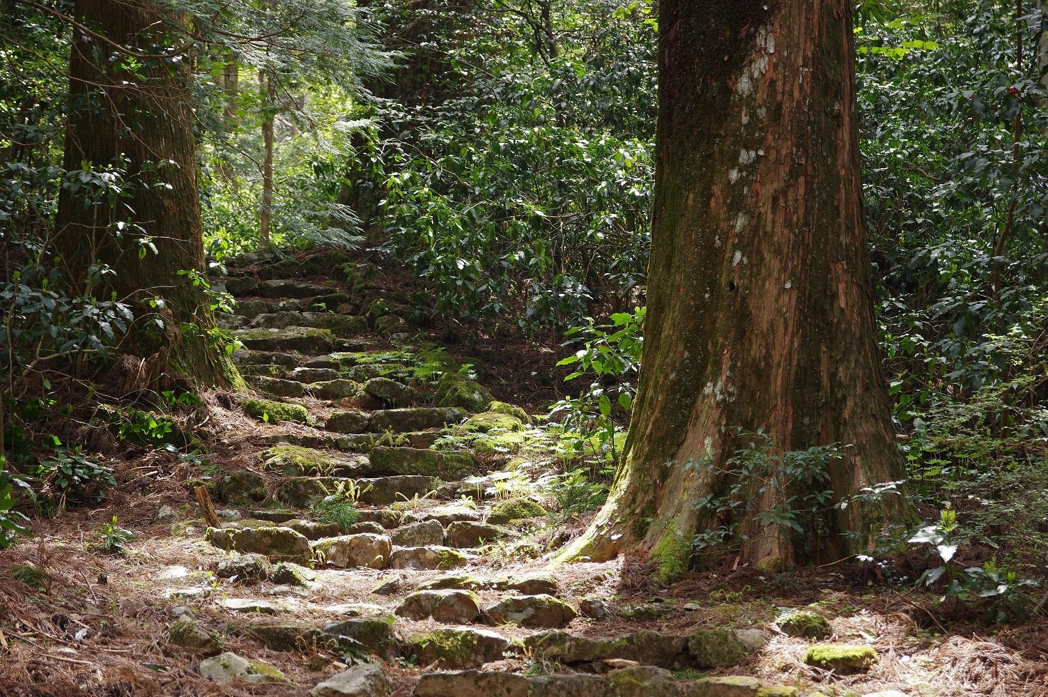 杉原神社前の参道