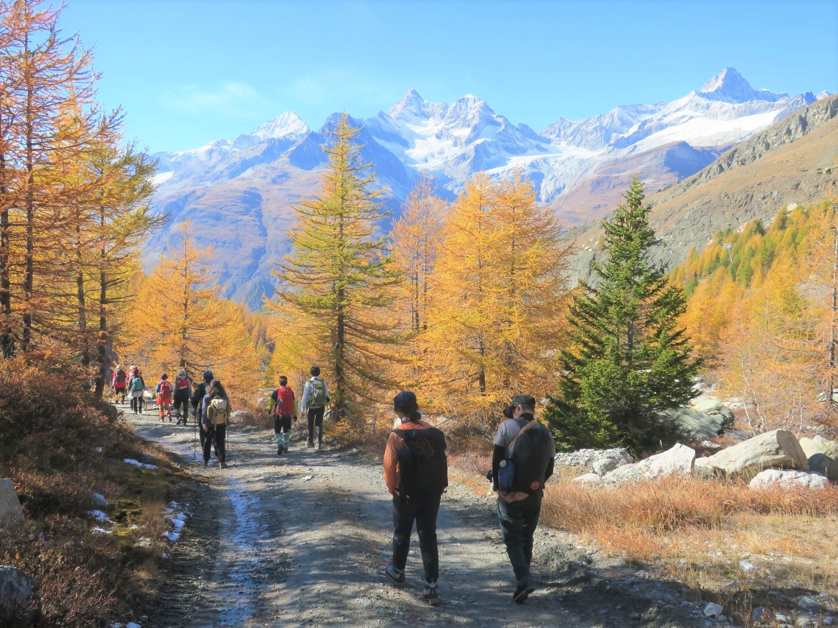 唐松の黄葉と雪化粧した山を眺める(7日目)