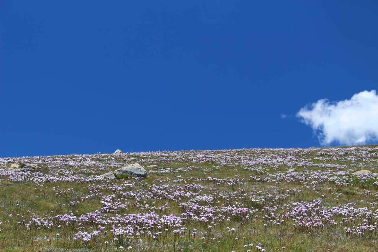 澄んだ空と花々の対比が美しい季節