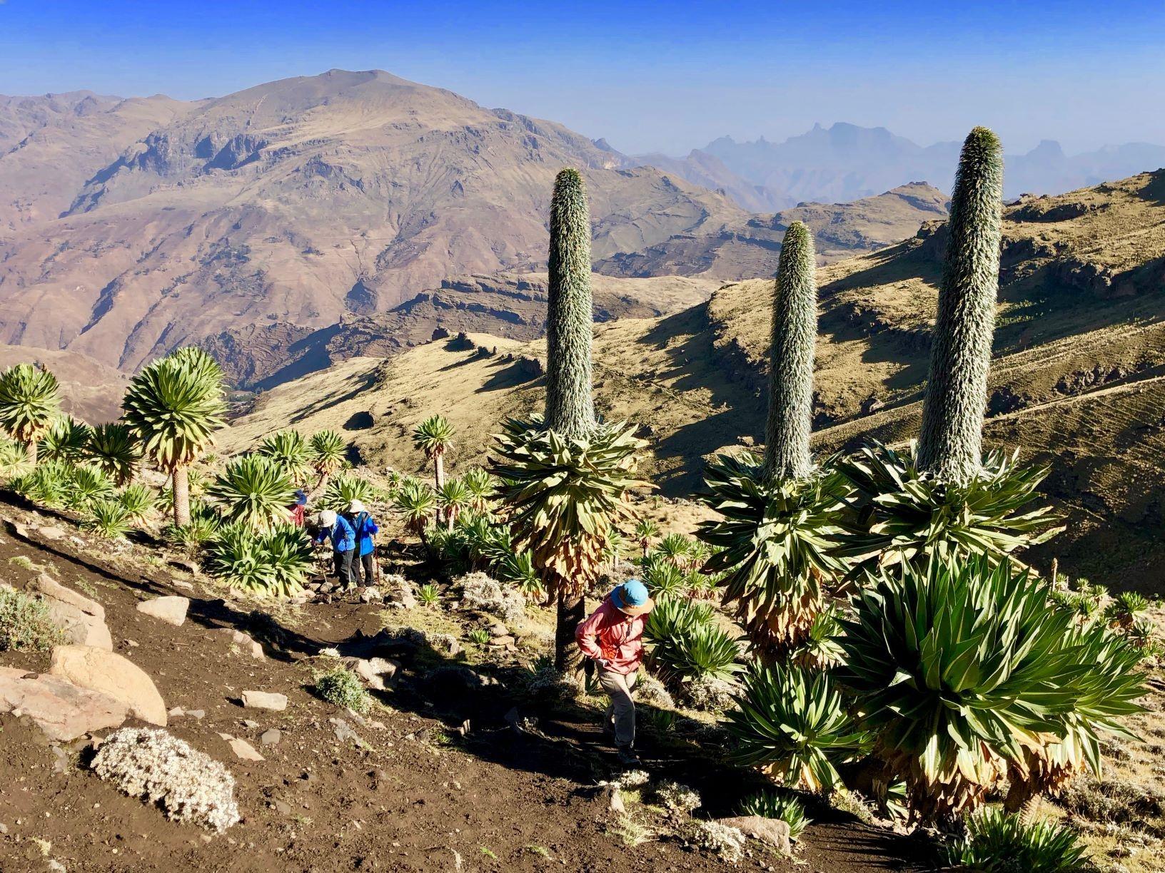 登山道沿いに自生する珍しい高山植物(5日目)