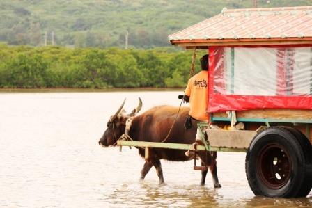 由布島の水牛車観光(フリータイム)