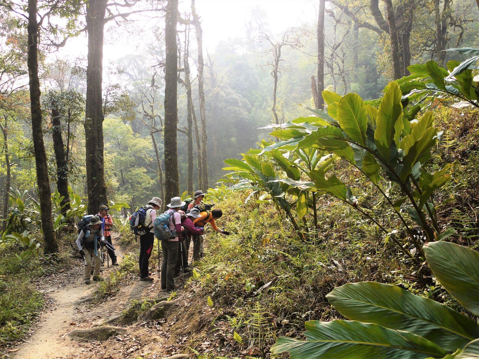樹林帯の中を第1キャンプへ(3日目)