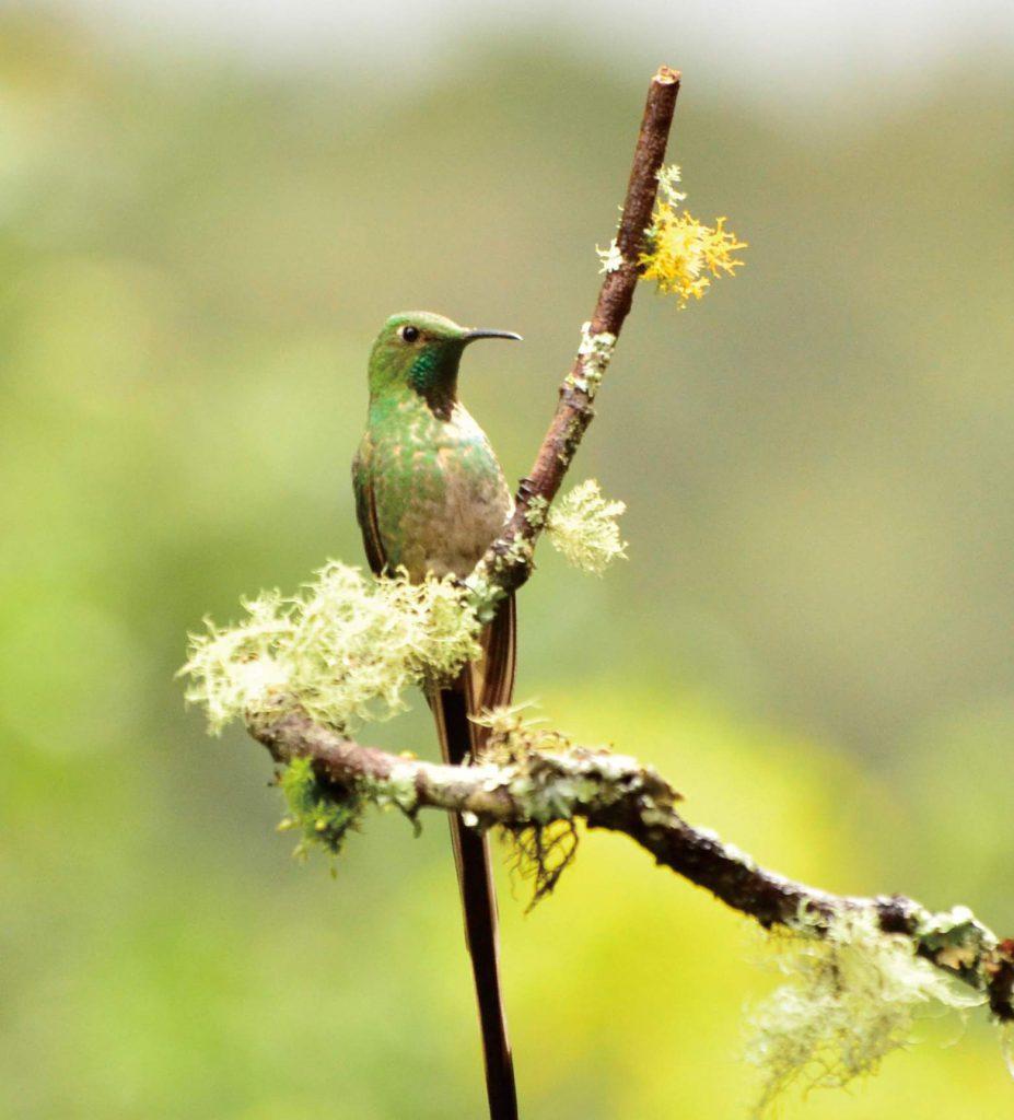 新ルート 「世界でいちばん鳥が多い国」へのツアー第3弾!