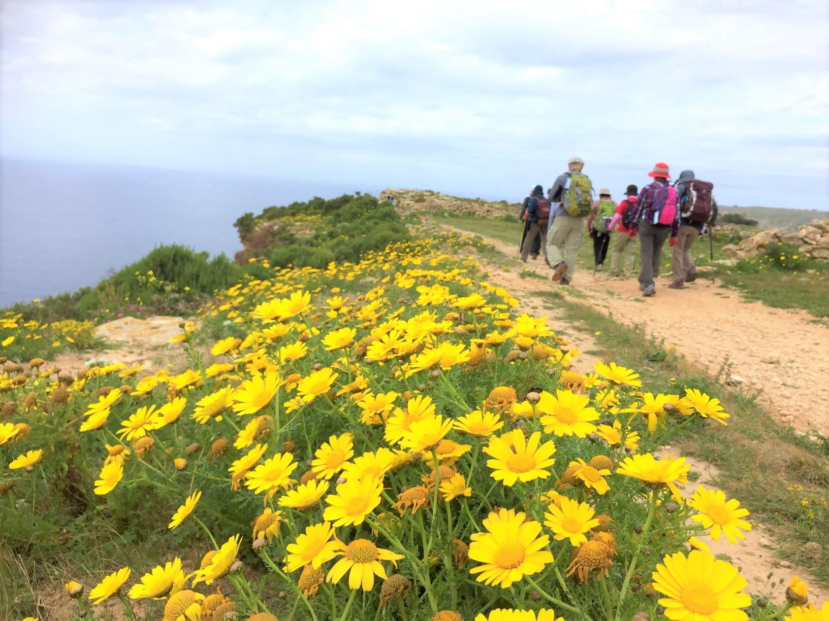 春の花咲くマルタ島を満喫(6日目)