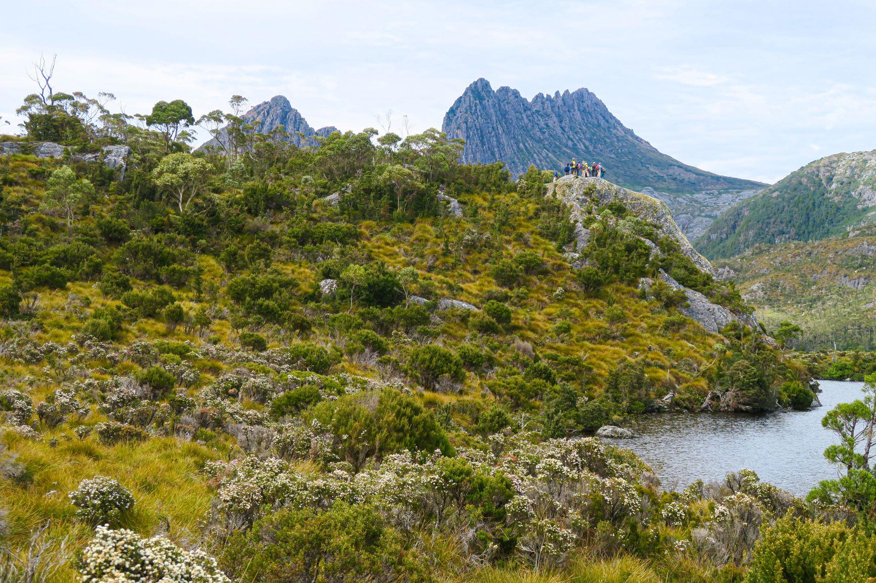 クレイドルマウンテンの荒々しい山容や美しい花々を見ながらダブ湖畔を歩く