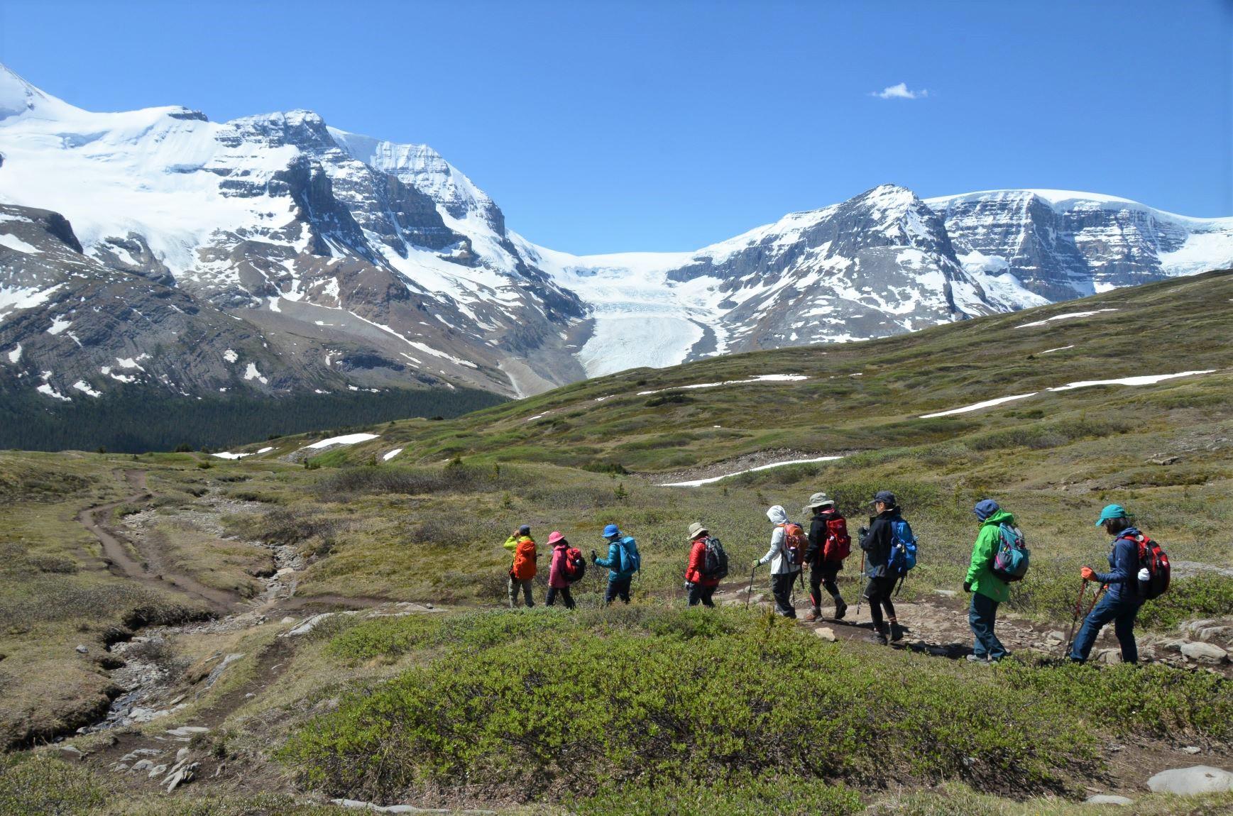 アサバスカ氷河と迫力の山々の展望が広がるウィルコックス・メドウにて(3日目)