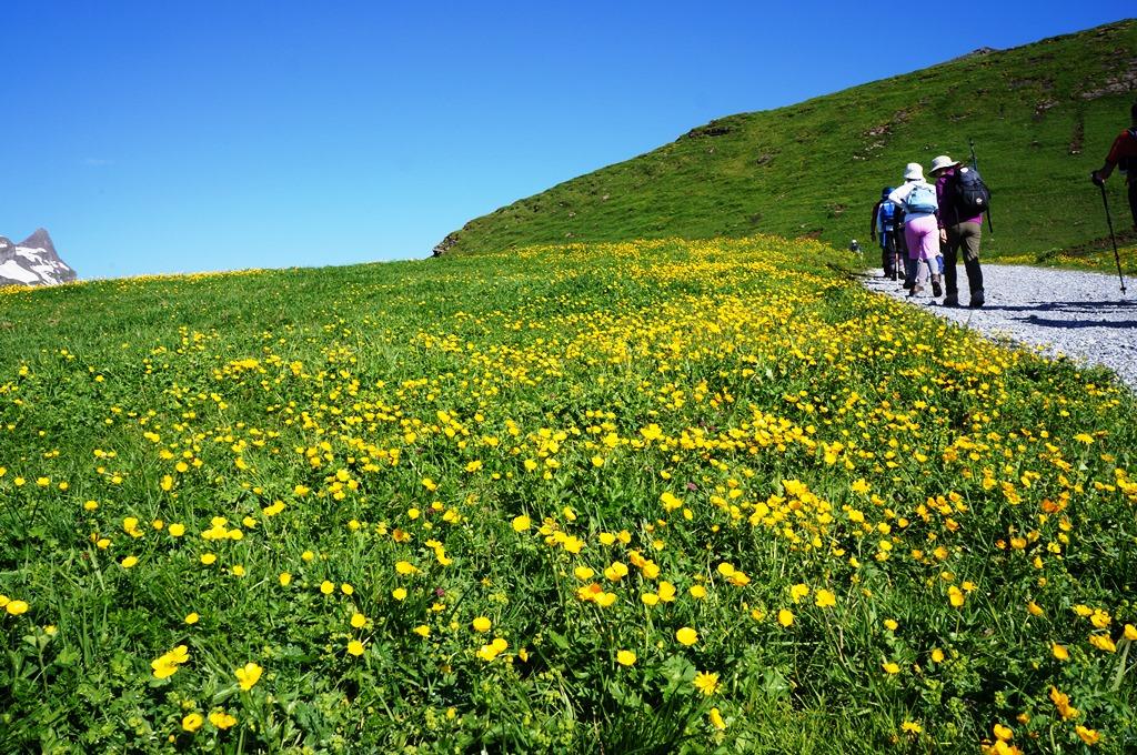 スイスには600種類以上の高山植物が自生する(2日目)